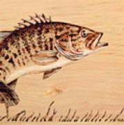 Small Mouth Bass Art Print