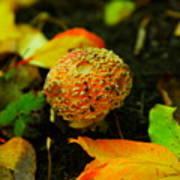 Small Mushroom In Autumn Art Print
