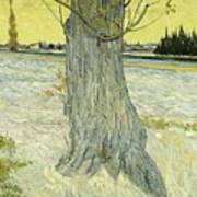 Small Pear Tree In Blossom Arles, April 1888 Vincent Van Gogh 1853  1890 Art Print