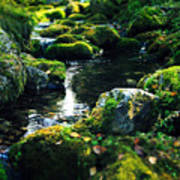 Small Stream In Green Forest Lapland Art Print