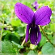 Small Violet Flower Art Print