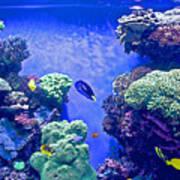 Smaller Fish In Monterey Aquarium-california  Art Print