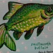 Smallmouth Buffalo Art Print