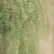 Smell The Pine Art Print