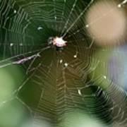 Smiley Spider Web  Art Print