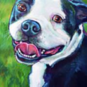 Smiling Boston Terrier Art Print