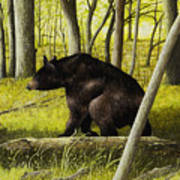 Smoky Mountain Bear Art Print