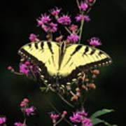 Smoky Mountain Butterfly Art Print