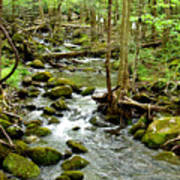 Smoky Mountain Stream 1 Art Print
