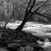 Smoky Mountain Stream Art Print