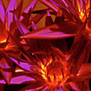 Smoldering Lilies Art Print