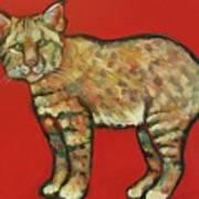 Smug Bobcat Art Print