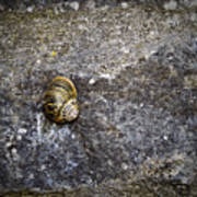Snail At Ballybeg Priory County Cork Ireland Art Print
