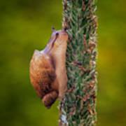 Snail Climbing The Tall Grass Art Print