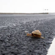 Snail Crossing... Art Print