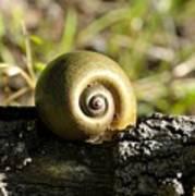 Snail Art Print