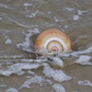 Snail In The Surf Art Print