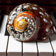 Snail Shell On Keys Art Print