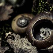 Snail Shells Art Print by Grebo Gray