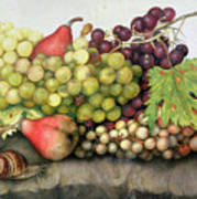 Snail With Grapes And Pears Art Print
