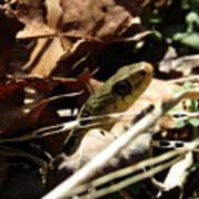 Snake In Nature Art Print