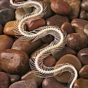 Snake Skeleton  Art Print by Garry Gay