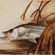 Snook In The Mangroves Art Print