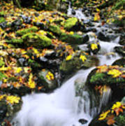 Snoqualmie National Fores Art Print