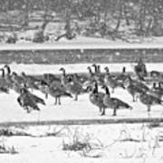 Snow And Geese On The River II Art Print