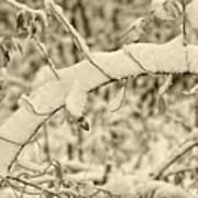 Snow Arch Art Print