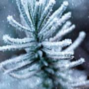 Snow Cover Pine Art Print
