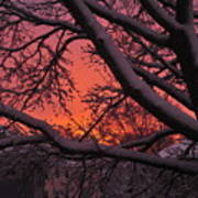 Snow Covered Branches At Sunset Art Print