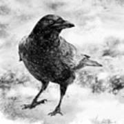 To Know A Crow Art Print