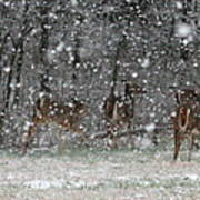 Snow Deer Art Print