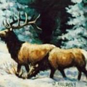 Snow Elk Art Print