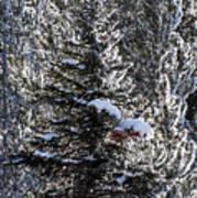 Snow Flocked Pines One Art Print