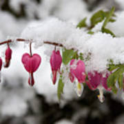 Snow Heart Art Print by Terry Walters