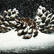Snow In June Art Print