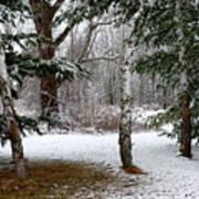 Snow In Pines Art Print