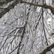Snow In Yosemite Art Print