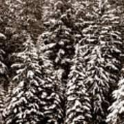 Snow-laden Forest Art Print