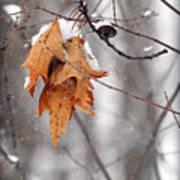 Snow Leaves Art Print