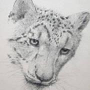 Snow Leopard - Intent Art Print