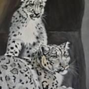 Snow Leopards Art Print