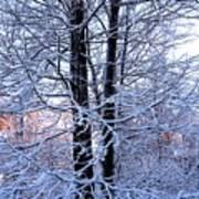 Snow Maple Morning Landscape Art Print