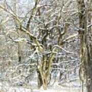 Snow On A Hedge Tree Art Print