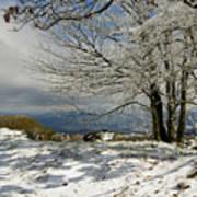 Snow On Beech Mountain  Art Print