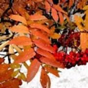 Snow On Scarlet Magick Art Print