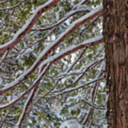 Snow On The Branches Art Print