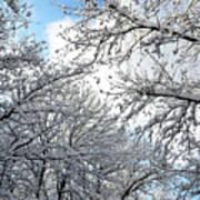 Snow On Trees Art Print